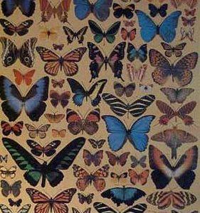 Butterflies various sizes